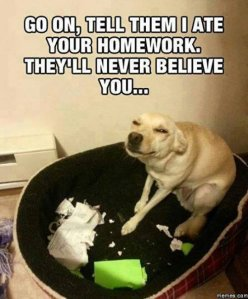 dog ate my homework